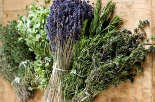 Idyl célèbre les plantes et les parfums de Provence