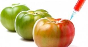 Les impacts multiples des OGM sur notre santé