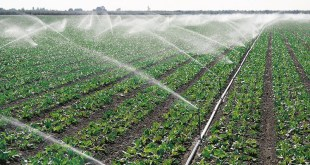 Irrigation-bad-pret