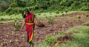 Le Groupe OCP va investir dans une usine d'engrais en Inde