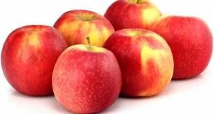 Les pommes clubs, des variétés fancy ont du succès