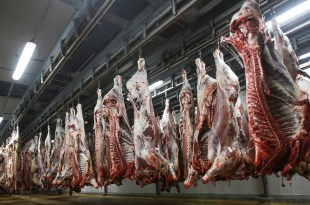 Les abattoirs de Casablanca couronnées par l'agrément ONSSA et la certification ISO 22000