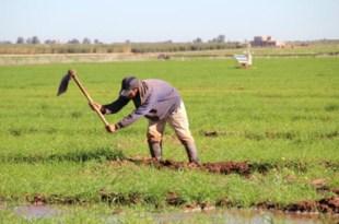Loi sur l'agrégation dans le cadre du Plan Maroc Vert