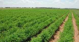 L'agriculture est-elle envisageable sur d'autres planètes ?