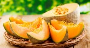 La culture du melon au Maroc: du semis à la plantation