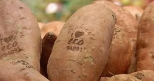 Fruits et légumes: Le marquage naturel au laser