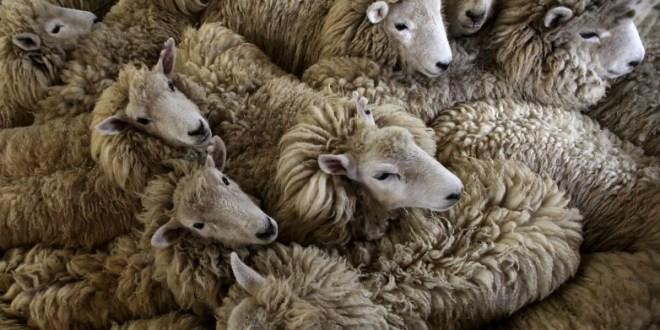 Maroc: Le risque de putréfaction de la viande serait à envisager