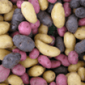 Cómo cultivar patatas en bolsa