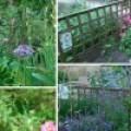 Plantas medicinales útiles en el huerto ecológico. 10 plantas que curan