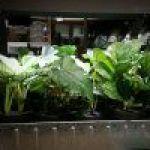 Huertos con poco sol: Qué plantar y trucos.