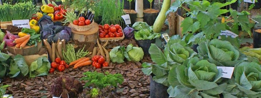 Resultado de imagen para horticultura