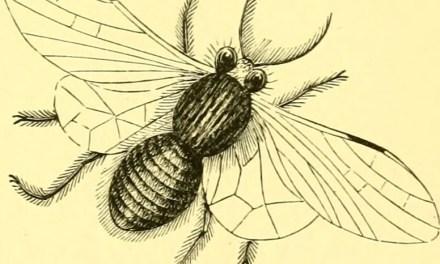 2. El refrán de las moscas y de la miel
