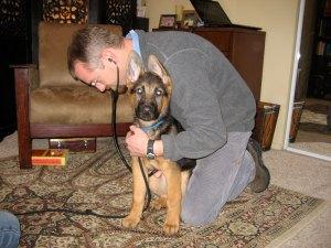Puppy exam