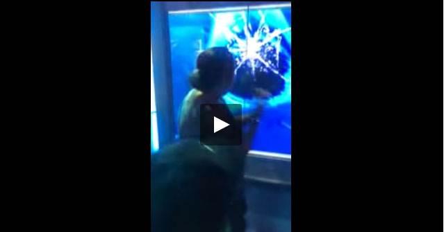 قرش يكاد يحطم زجاج الحوض ليهاجم سيدة