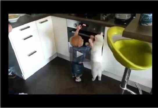 بالفيديو: قط يبعد طفل عن موقد الغاز - أحلى عالم