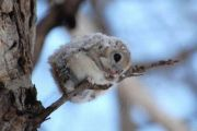 صور حيوانات على الثلج لقطات طبيعية قمة في الجمال