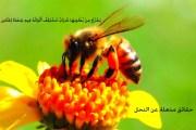 حقائق عن النحل ومنتجاته الكثير منا لا يعلمها في هذا المقال