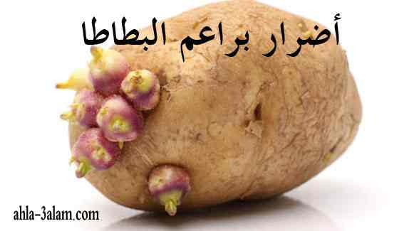 أضرار براعم البطاطا