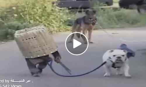 شاهد قرد وكلب يتشاركون المخاطر على الطريق كوميدي