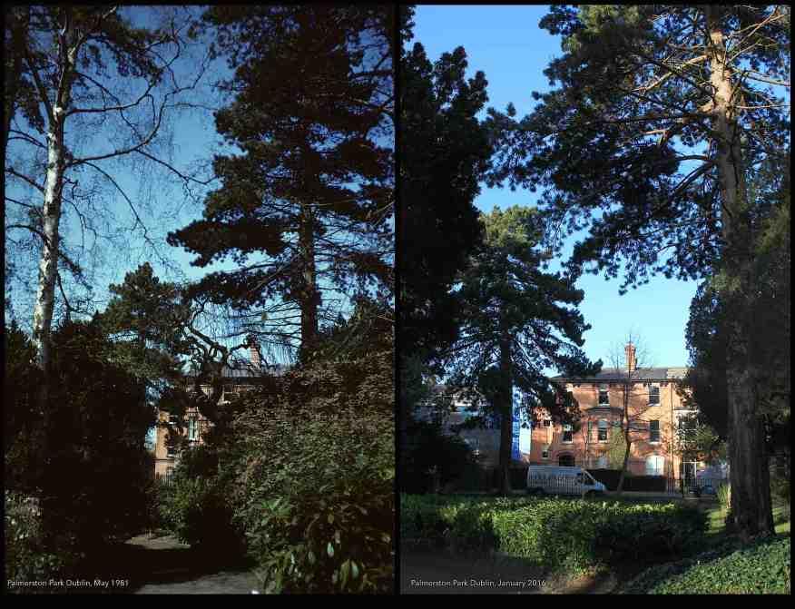 Palmerston Park Dublin, 1981-2016