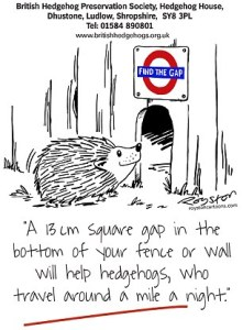 Find the Gap Poster from the British Hedgehog Preservation Society which reminds people to leave gaps in  fences  etc for hedgehogs to move between gardens