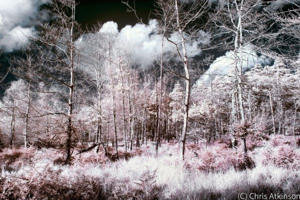 Autumn Infrared at Anderwood
