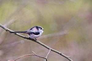 Flora & Fauna in Feb Video