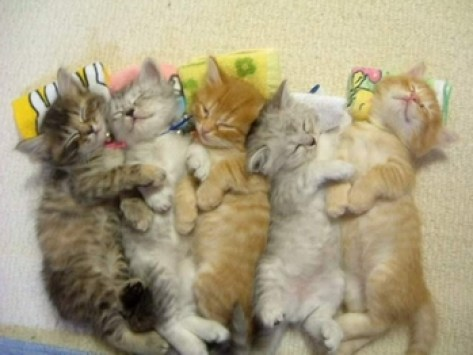 kucing-ampuh-pereda-stress