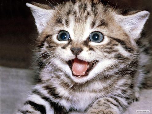 kucing-imuts