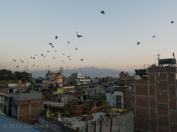 Rooftop view of Kathmandu when the birds flock at dusk