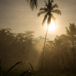 AlanStockPhotography-Bali-landscape-Photography-Workshop-Sunrise-jungle-forest-mist-sunrays-David-Metcalf-02