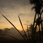 AlanStockPhotography-Bali-landscape-spider-silhouette-Photography-Workshop-Sunrise-Fields-Rice-David-Metcalf