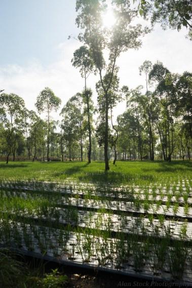 Bali plantation