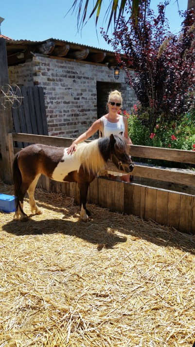 The Grounds of Alexandria Pony