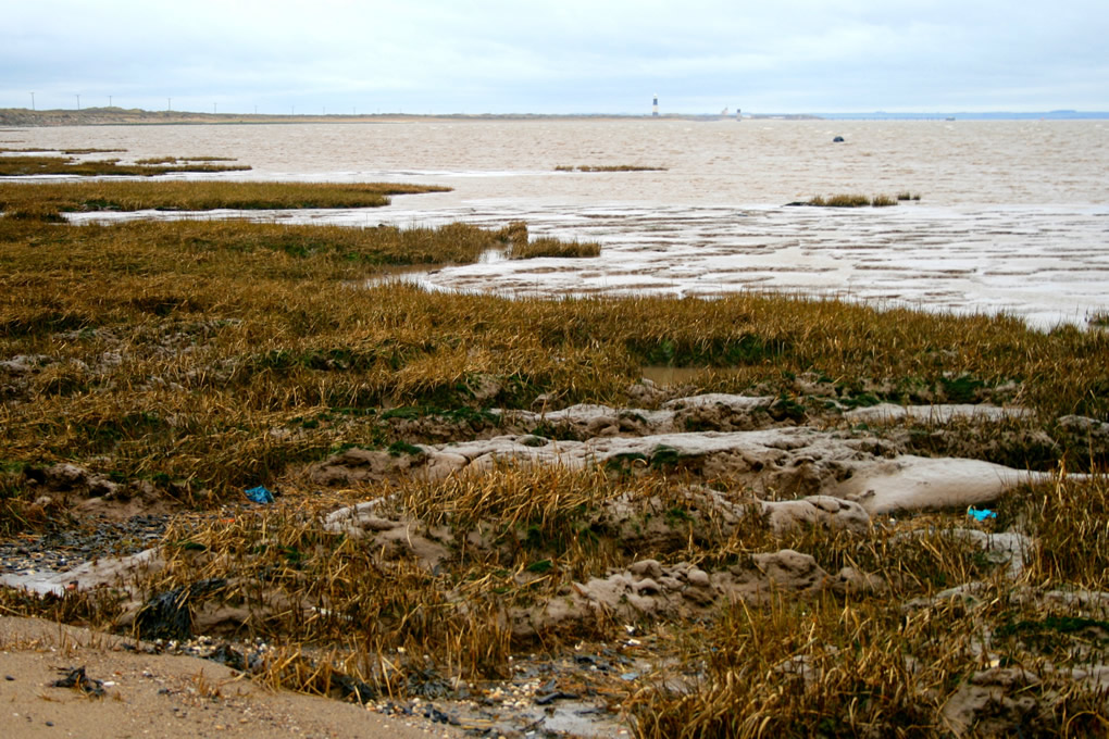 Salt Marsh behind Spurn Point
