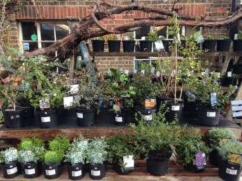 Herbs & Wisteria