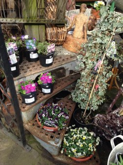 Iron steps, ivy and spring plant selection