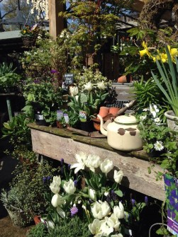Spring plant selection