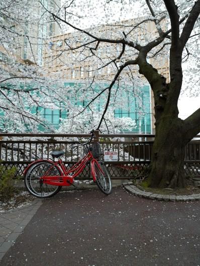 itabashi_sm_MMFC0671