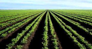 وزير الفلاحة: الجزائر تنتج ما قيمته 03 آلاف مليار دج في القطاع الفلاحي