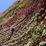 Jardín vertical eco.bin en Ibiza