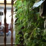 Paisajismo y jardines verticales en Madrid