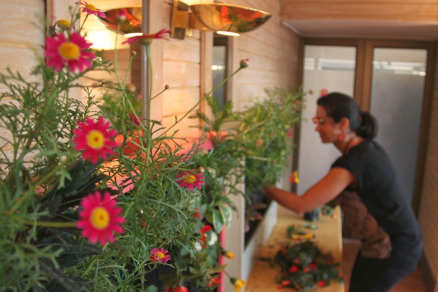 Formaci n en jardines verticales alicante forestal for Jardines verticales alicante