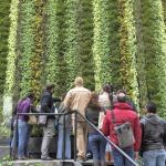 Nuevo curso: Jardines verticales y cubiertas vegetales en México