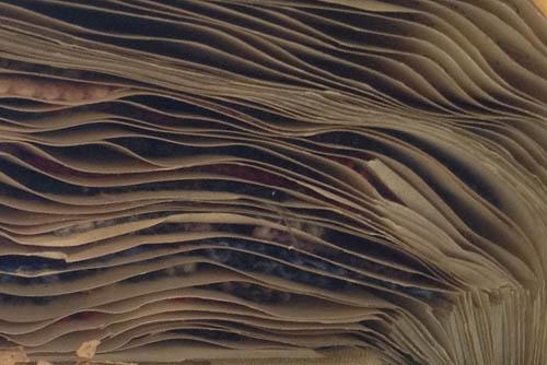 wool sample sheets 1 blog