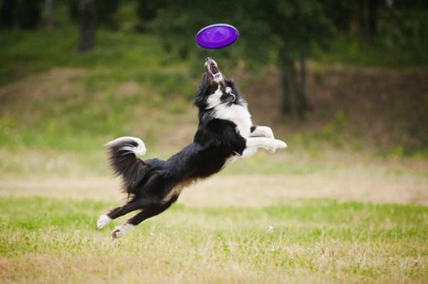 Dog Exercises