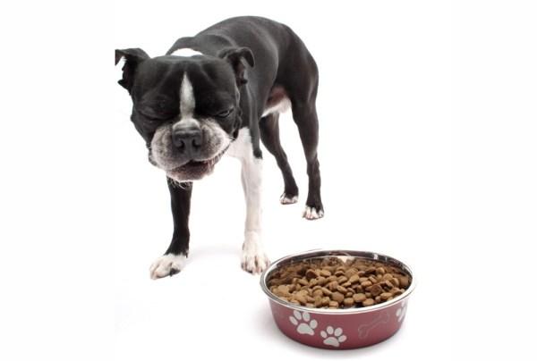 Dog-Food-I-5-800px-51b98bda