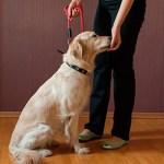 ensenar-perro-a-sentarse-4