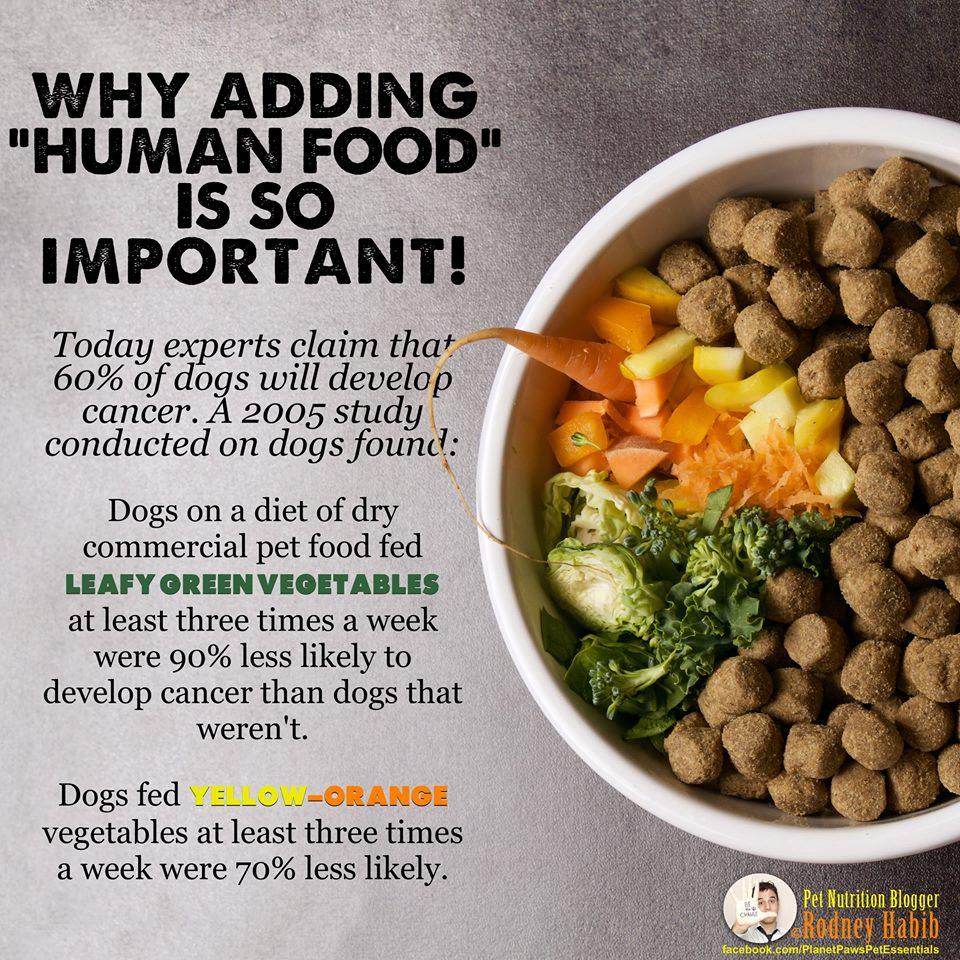 Fullsize Of Best Dog Food For Labs