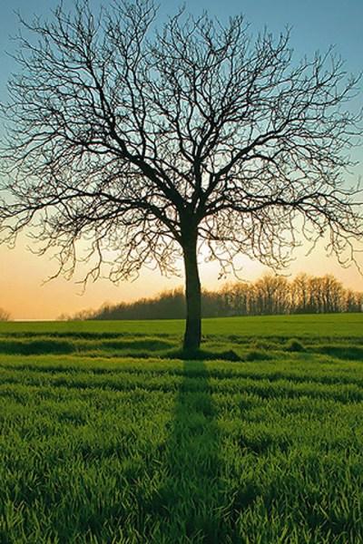 Leafless Tree iPhone Wallpaper HD